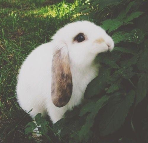 Aww cute :-)