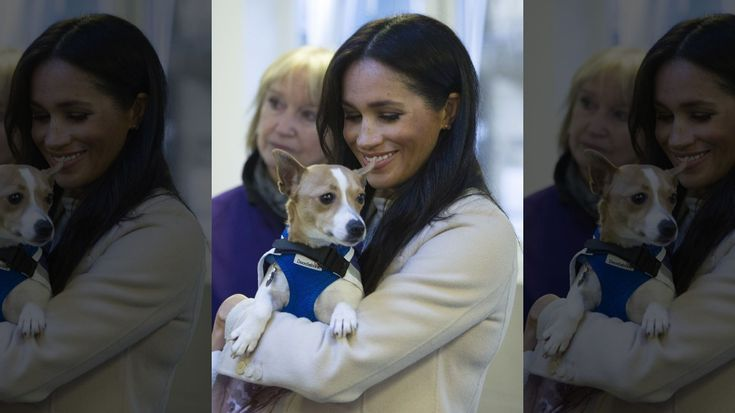 Meghan Markle opens up about being a proud rescue dog owner for charity Meghan Markle opens up about being a proud rescue dog owner for charity