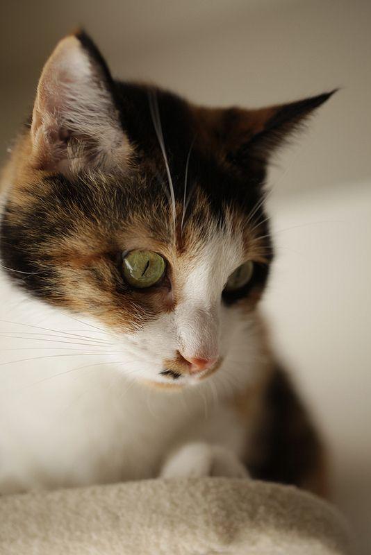 portrait of my cat