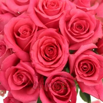 Shocking Versilia Hot Pink Rose - 25 Roses (Allow 4 Business days for delivery)