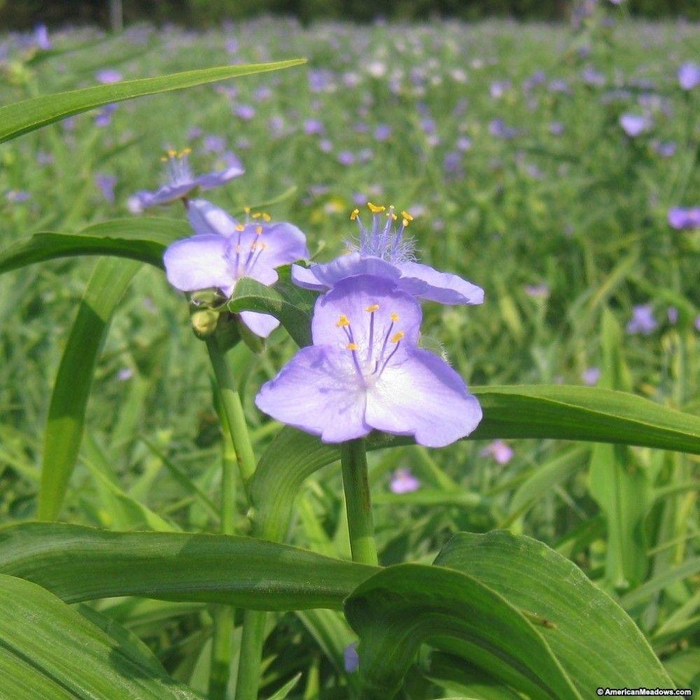 So erstellen Sie ein Naturschutzgebiet mit einheimischen Pflanzen #einheimischepflanzen