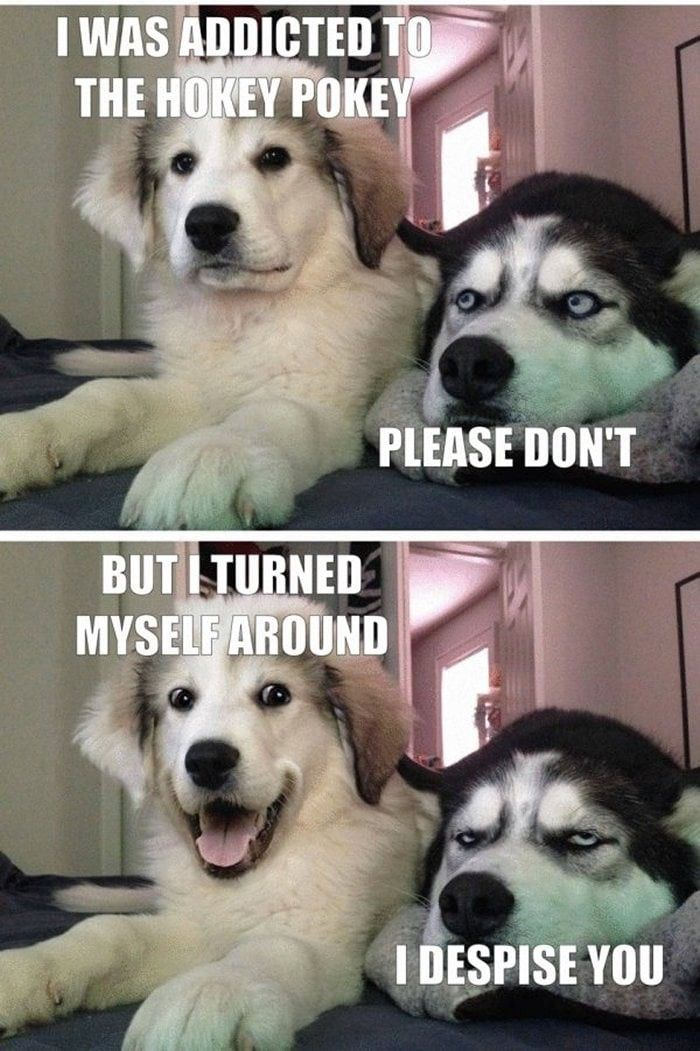 Funny Dogs That Will Make Your Day