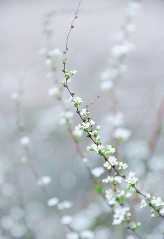 Pin von Jovanka auf Spring | Pinterest