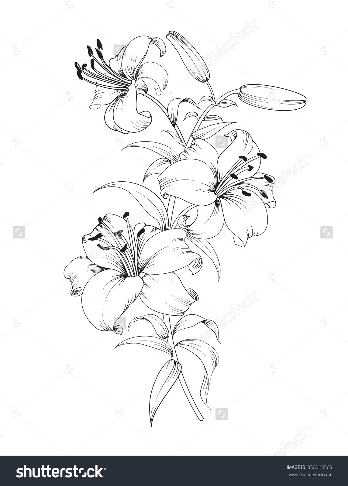 Group of lily flowers. Floral background with blooming
