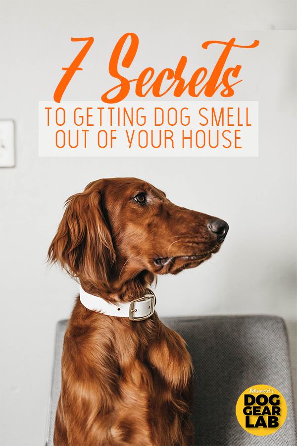 7 Secrets To Getting Dog Smell Out Of Your House Dog Smells Dog Odor Eliminator Pet Smell