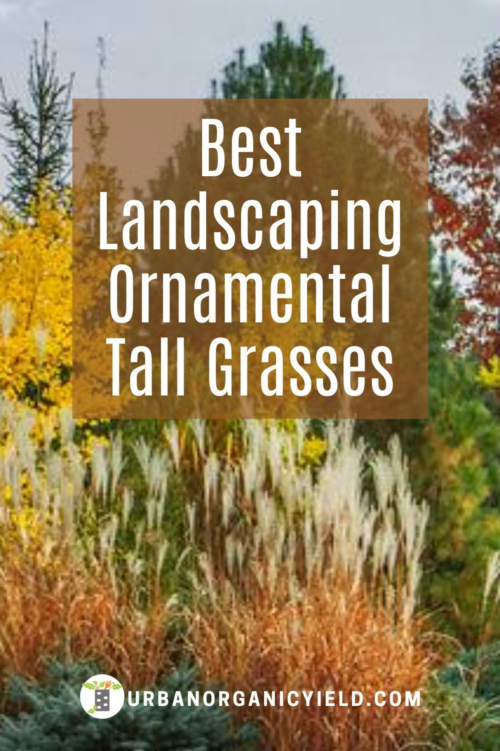 Landscaping Tall Ornamental Grass For Privacy In Your Backyards Tall Ornamental Grasses Ornamental Grasses Grasses Landscaping