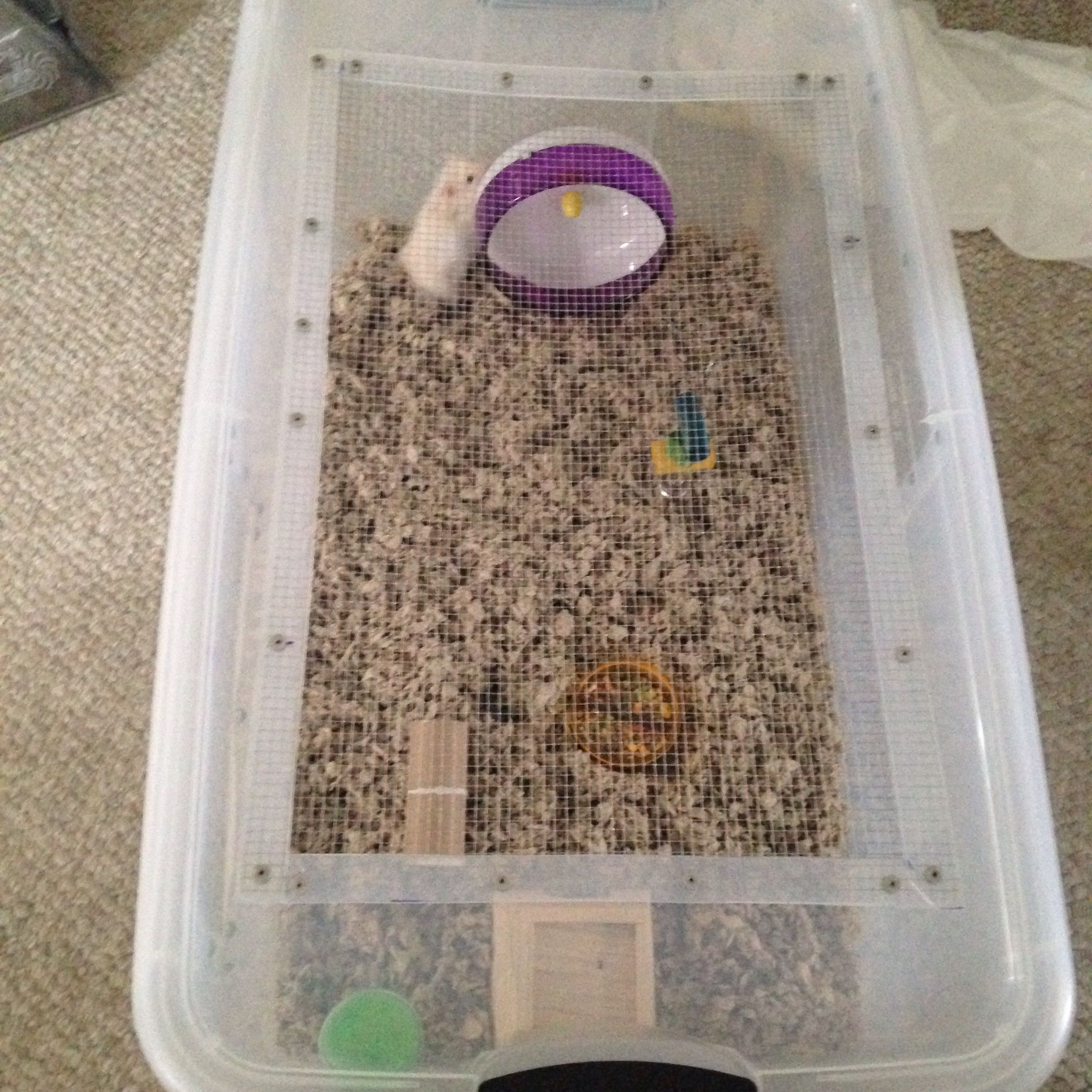 Diy Hamster Cage Made From Large Plastic Bin Much More