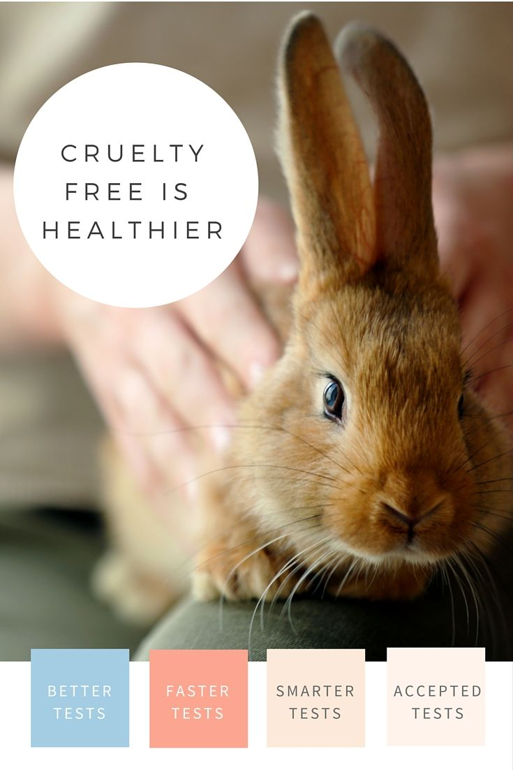 Cruelty Free Fashion Runways Cruelty Free Fashion: Cruelty-free Makeup And Cosmetics Aren't Just The Kinder