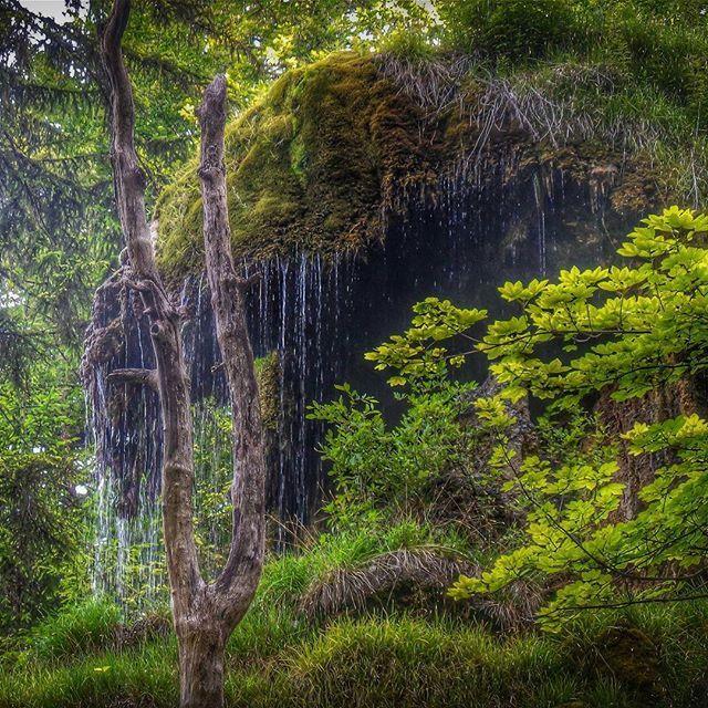 Tüfels Chilen #backflash #switzerwonderland #switzerland #hiking #wanderlust #landscapes #impressions #walk #wilderness #nature #mysticplaces #tösstal #forest