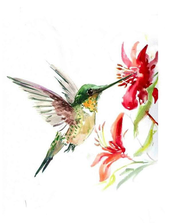 Tonys Pic Humming Bird Art Watercolor Hummingbird Bird Drawings