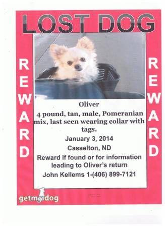 Http Appleton Craigslist Org Laf 4701629149 Html Losing A Dog
