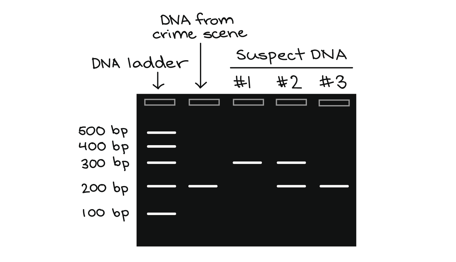 Polymerase Chain Reaction Pcr Article Khan Academy Dna Technology Study Motivation Dna Sequence
