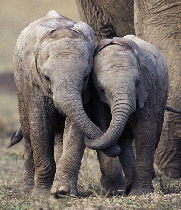 Another 12 Animal Photos You Won T Believe Are Not Photoshopped Oddee Elephant Animals Baby Elephant