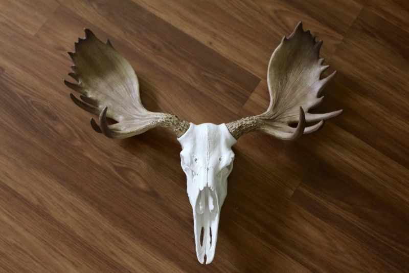 Wall Charmers Faux Taxidermy Alberta Moose Skull Review & Giveaway