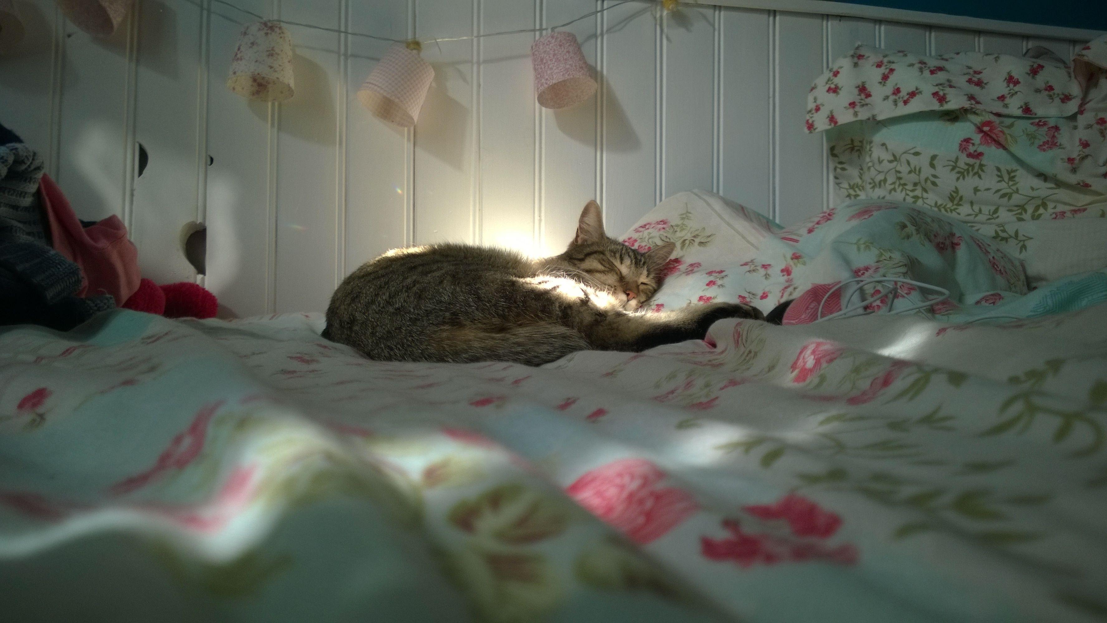 Cat - Patachou