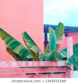 Palm on pink wall Plants on pink concept art Canary island gallery islands lover design idea art wall plant print