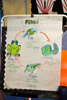 Life Cycle Frogs Anchor Charts Lifecycle Of A Frog