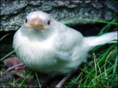 Photo of Albino Animals and People – Albino Animals – #Albino #Animals #People #Animals …