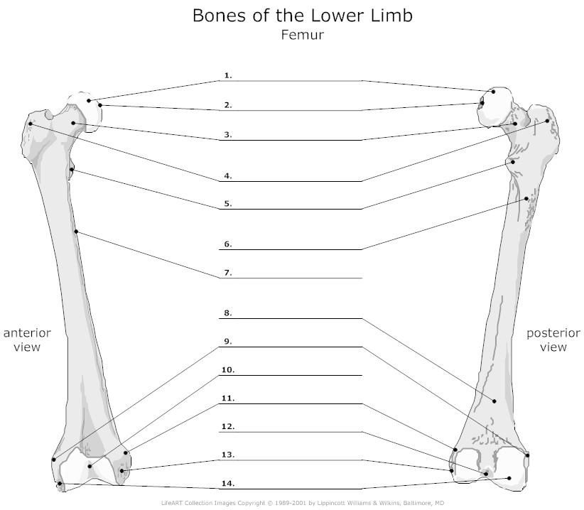 Pin by Mariela Martinez on skeleton | Pinterest | Anatomy and School