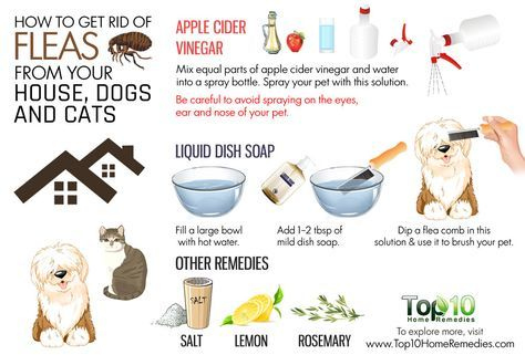 How To Get Rid Of Fleas From Your House Dogs And Cats With