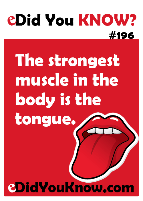 the strongest muscle in the body is the tongue. http://edidyouknow, Human Body
