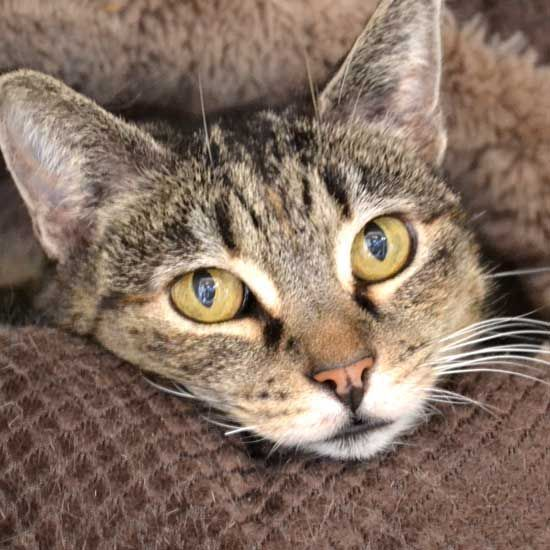 Cat Kittens For Adoption In San Diego With Images Kitten