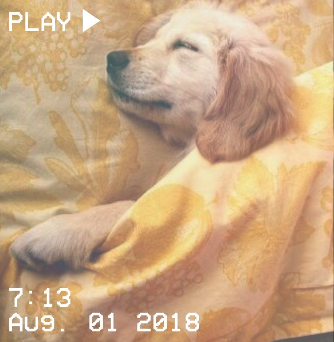 M O O N V E I N S 1 0 1 Vhs Aesthetic Video Play Time August Sleep Puppy Dog Yellow Blanket Yellow Aesthetic Aesthetic Colors Aesthetic