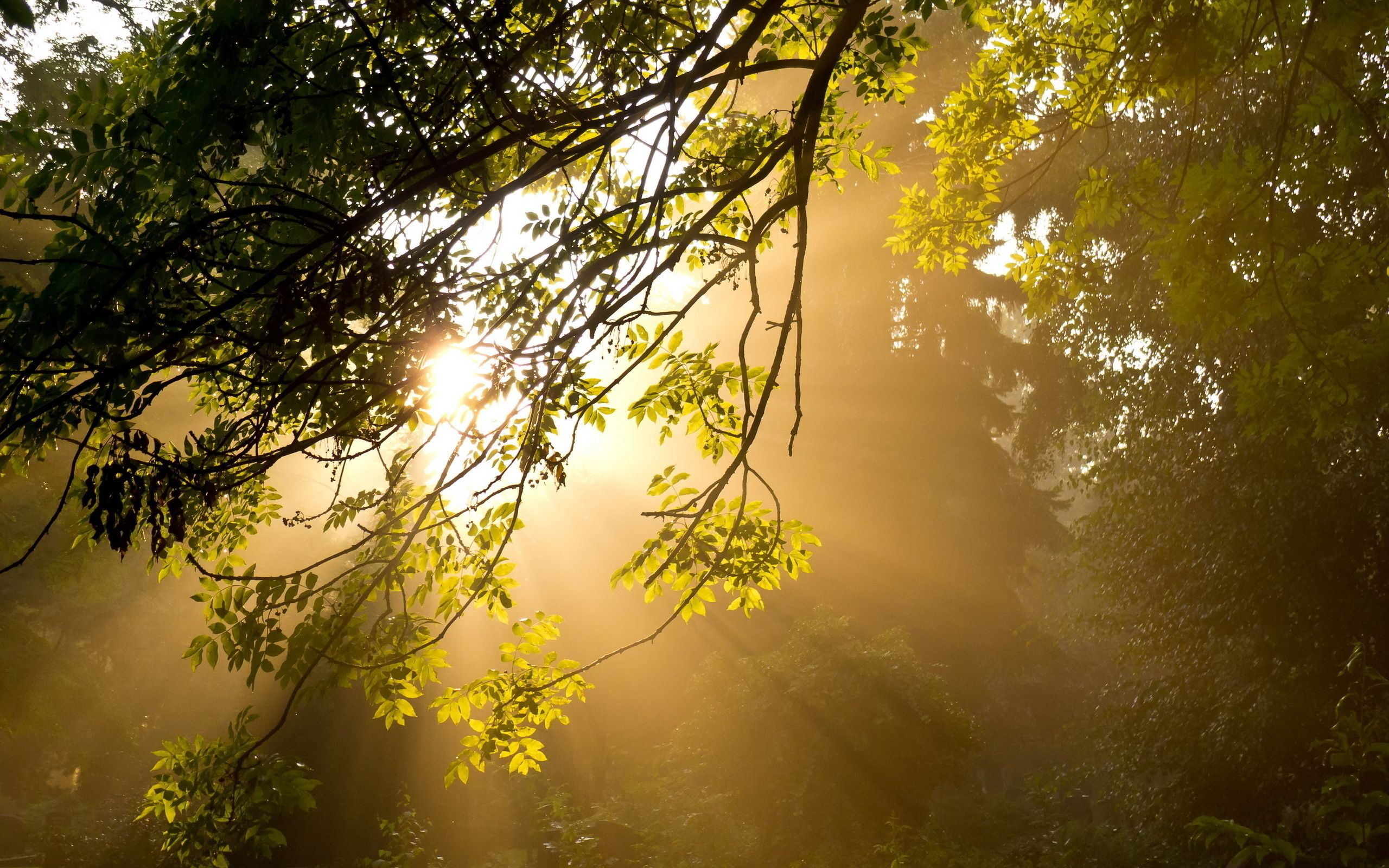 nice Good Morning Sunshine Wallpaper Sunshine wallpaper