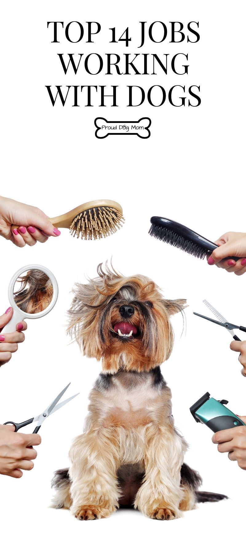 Top 14 Jobs Working With Dogs Proud Dog Mom Jobs Working With Dogs Dog Grooming Jobs With Animals