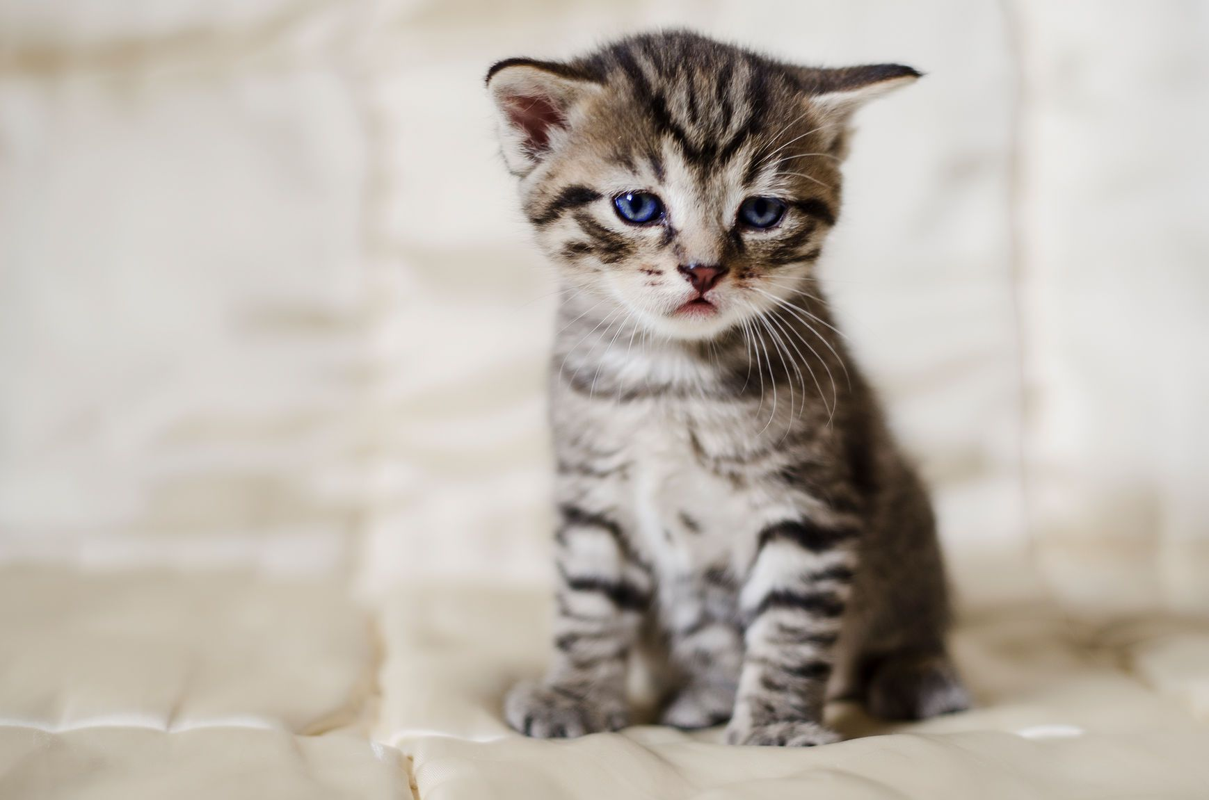 How Can You Tell If Your Cat Is Sick Learn About The Signs Of Illness In Cats And Find Out What To Do About Them Cats Animals Cat Spray