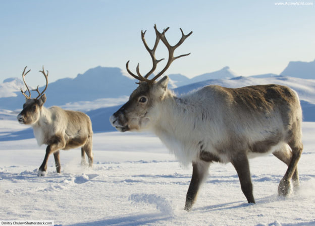 Arctic Animals List With Pictures, Facts & Information in