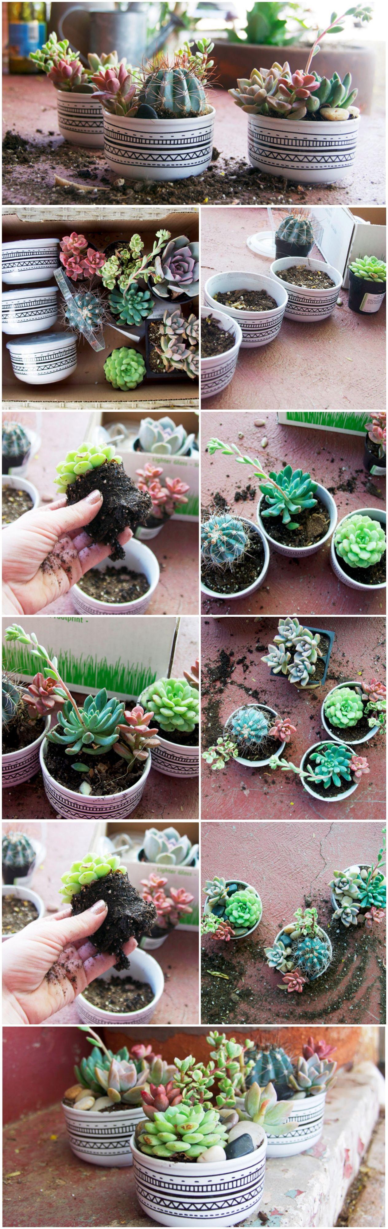 DIY your own mini succulent garden with this easy gardening tutorial!