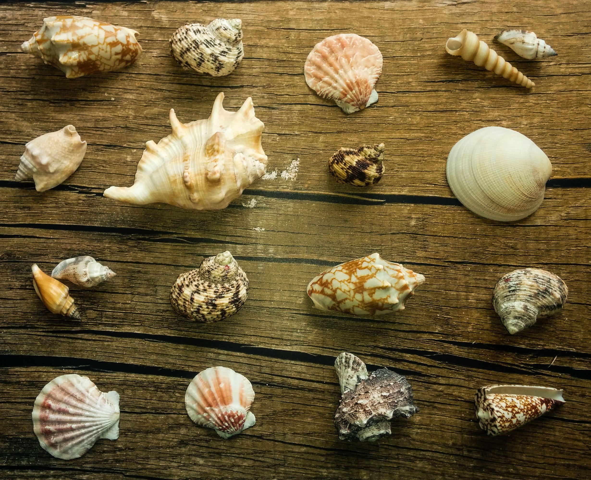 Seashell moodboard by Maria Lillepruun of Magic Attic Design