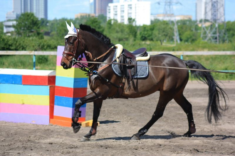 Oldenburg horse Либерти (Liberty) | Horses, Eventing, Equines