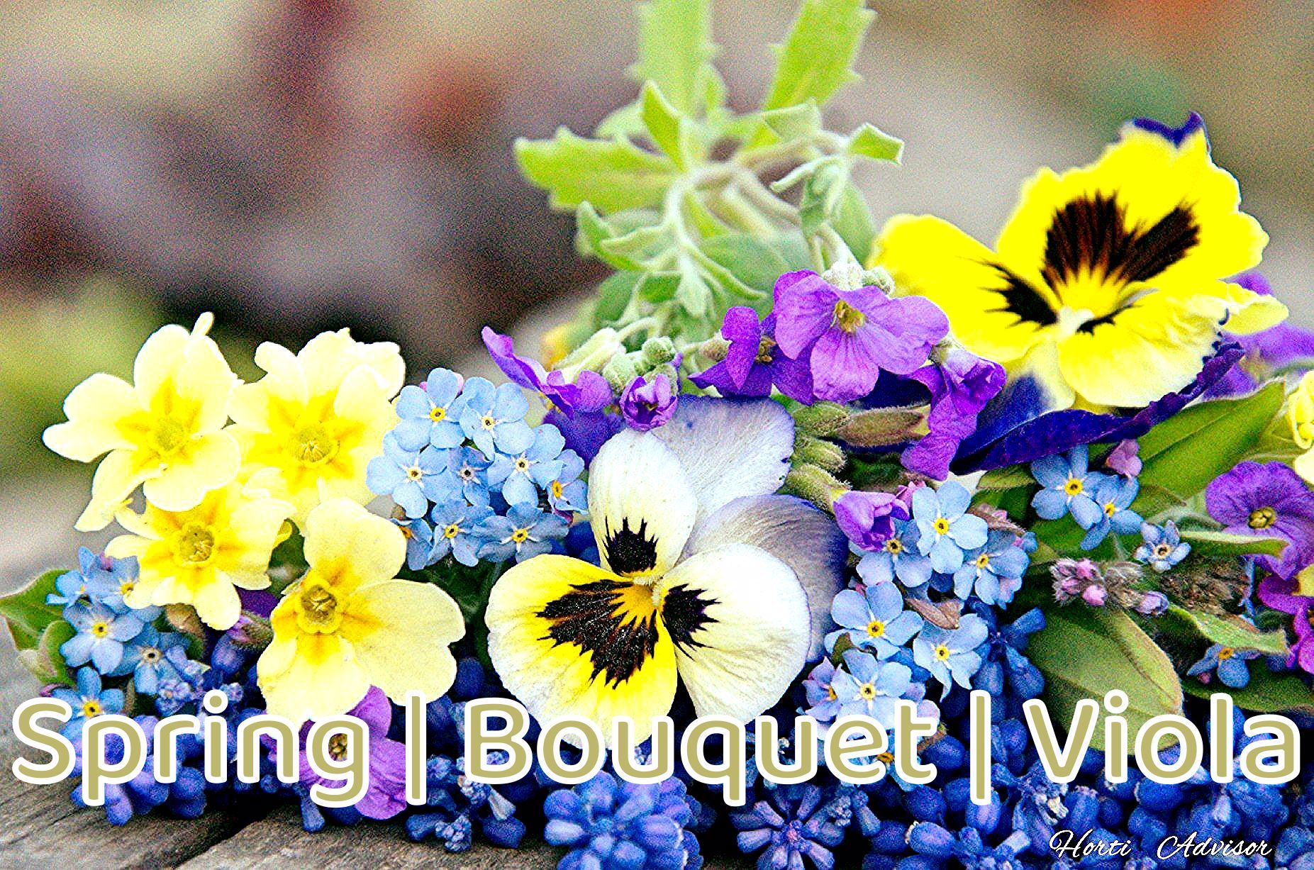 It doesn't really matter how big a bouquet 💐 you want to give. All you need is a small flower 😉. Worse when it comes to choosing the species and color of the plant. | #bouquet #flower #flowers #plant #bratek #viola #bukiet #wiosna #spring #kwiaty #ogród #ogródek #forget-me-not #bouquets #stokrotka #floral #garden #plants #prezent #ogród
