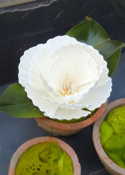 The Shellatier Collection by Karen Robertson - Pectin Shell Magnolia in Terracotta Container