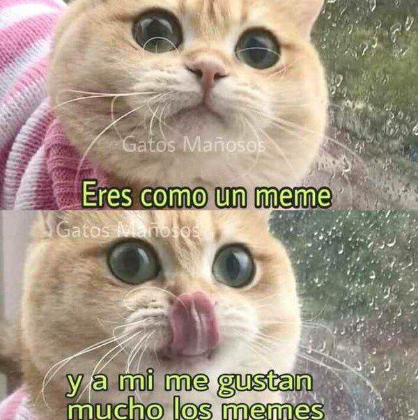 Pin De Caro Martinez En Frases Meme Gato Perros Graciosos