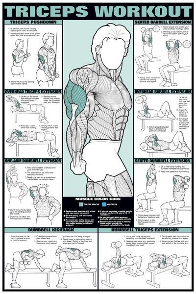 Triceps Workout Tough Muscle For Women To Build But These Work Sure