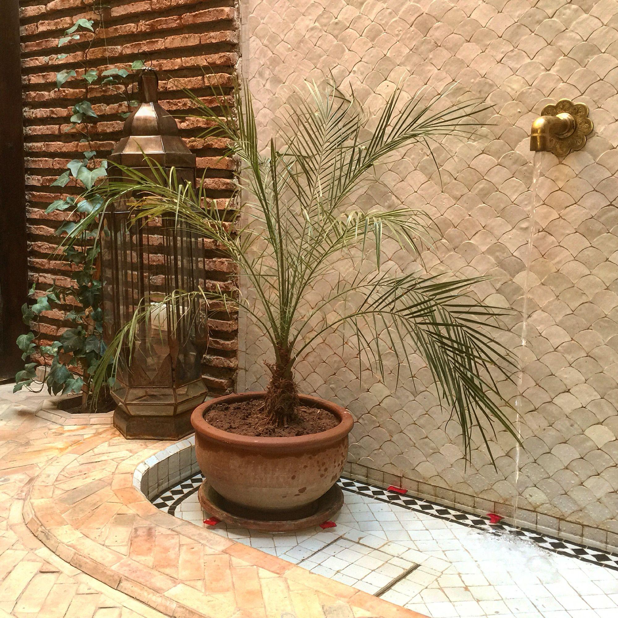 #buenosdías empezamos el día escuchando el sonido del #agua de la #fuente de #riadpalaciodelasespecias ❤️   www.palaciodelasespecias.com