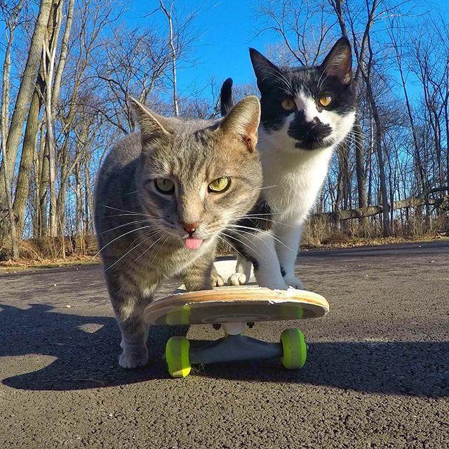 kick-push w/ @weirdbeard_the_cat #GoPro