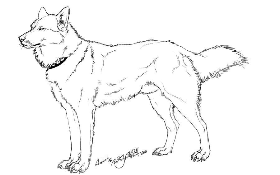 free husky outline by whitespiritwolf