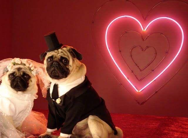 Paulo Babboni Figurinos On Instagram Confeccao De Mini Noivos Para Campanha C A Dia Dos Namorados Mini Costumes Developed For A C A Valentine S Day C Hochzeit