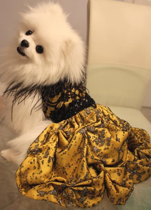 Fashion Show Palm Desert 2013 Items For Sale Dog Dresses Pet Apparel Designer Dresses