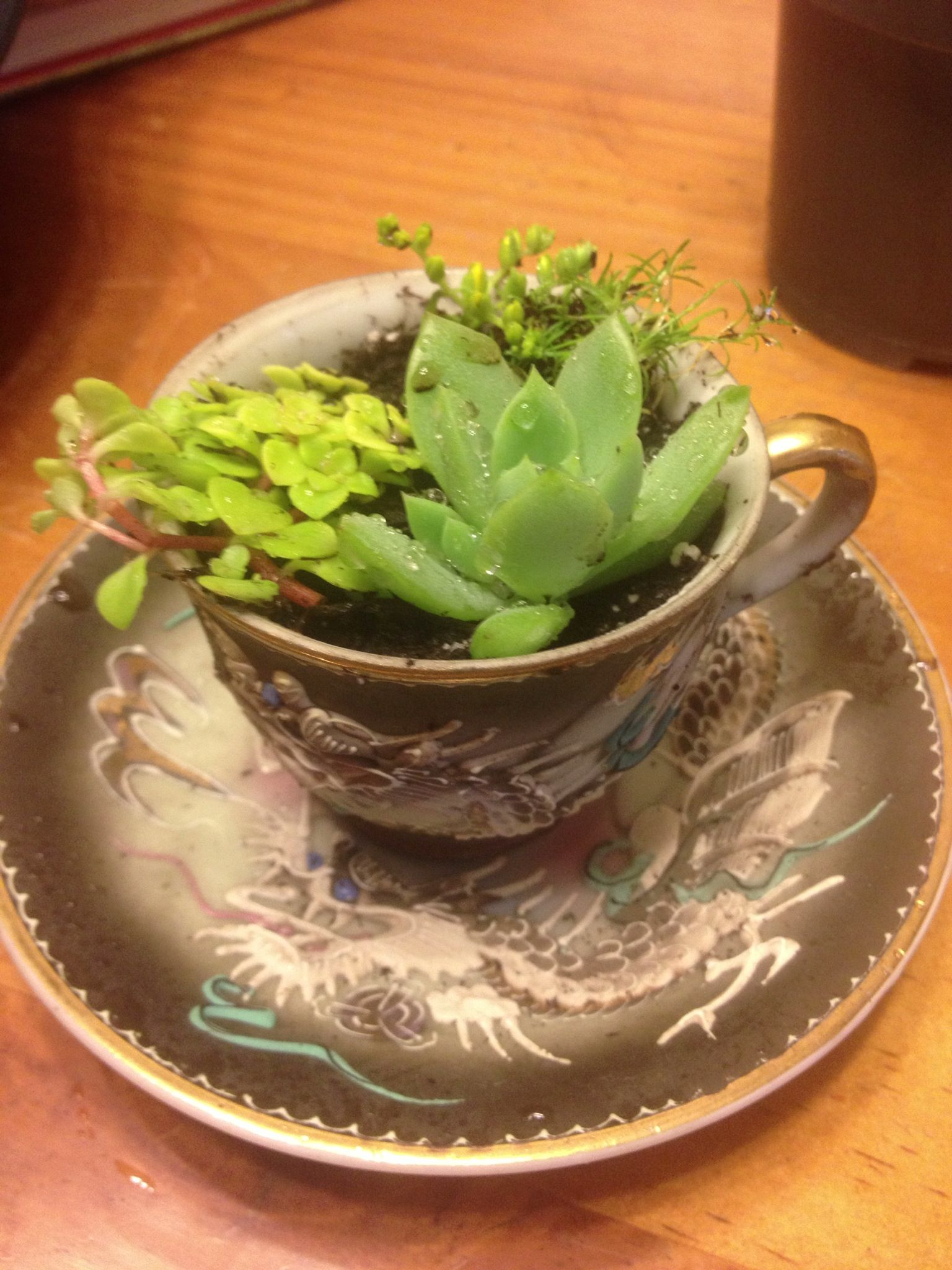 Mini teacup succulents for my brat of a sister Tiffany. | Garden ...