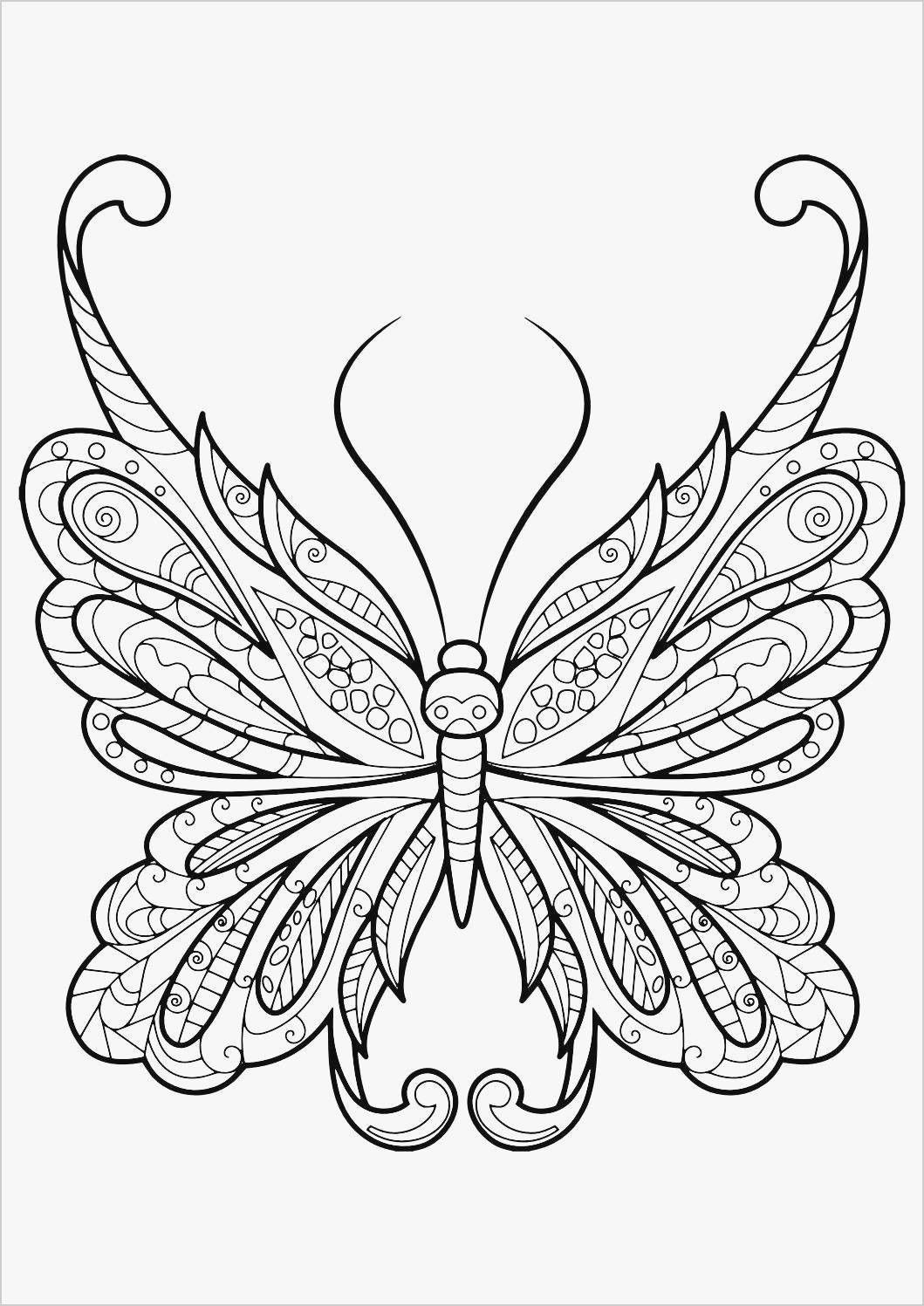 10 Beautiful Butterfly Coloring Book Insect Coloring Pages
