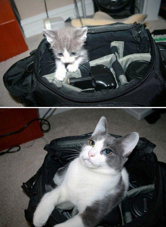 26 Fotos de antes e depois, de gatos resgatados, que tornaram nossa semana melhor.