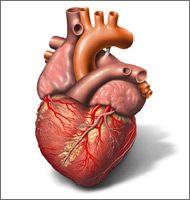Mensch Ohne Herz