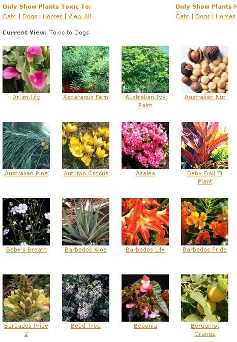 List Of Plants From Aspca That Are Toxic To Dogs Plants Toxic To