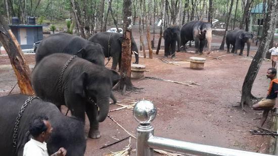 Kottoor Elephant Rehabilitation Centre Kerala Trivandrum