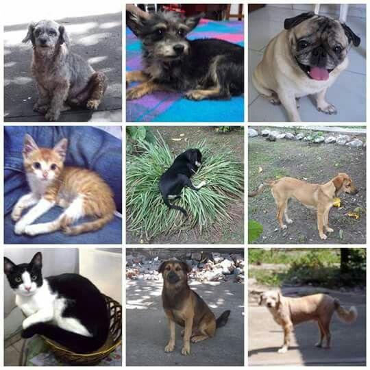 Mis adorables mascotas - hijos.
